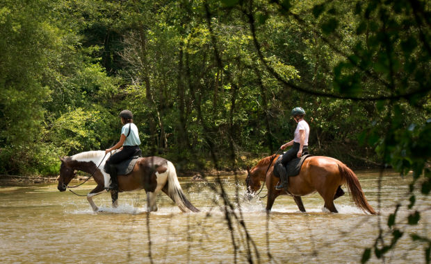 ivy bluff trail horseback